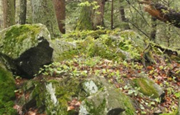 Hemlock Gorge Audubon Sanctuary