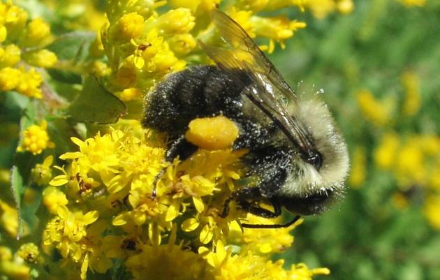 Birds & Bees Field Trip: Rockefeller State Park NY