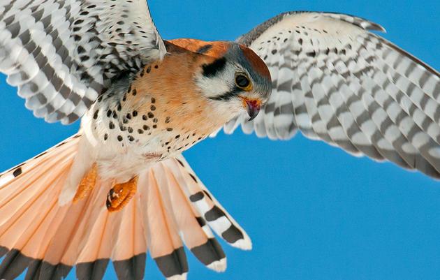 Quaker Ridge Bird Count