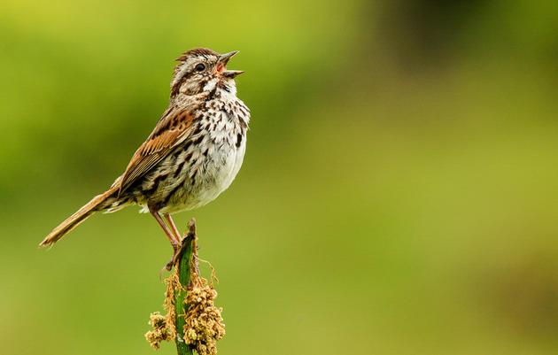 Post Bird Sightings Online