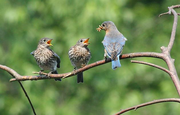 Summer Bird Count