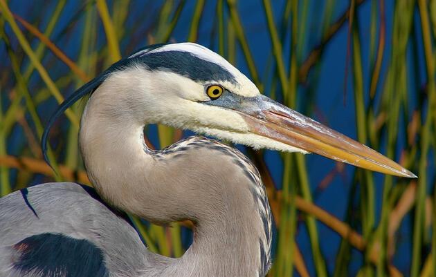 Oneida Audubon Sanctuary