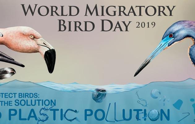 World Migratory Bird Day: Annual Early Morning Bird Walk and Breakfast