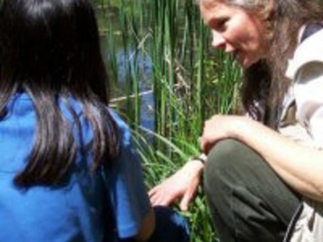 Teacher - Naturalist Volunteers